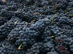 French company buys Oregon Pinot Noir producer Beaux Frères
