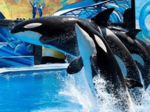 SeaWorld Entertainment stock slowly rises as year-end report nears