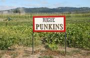 In addition to hops Rogue Farms also grows pumpkins each fall.
