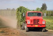 Rogue leases 60 acres from Wigrich Ranch, a site that was part of one of the world's largest hop yards in the 1920s.
