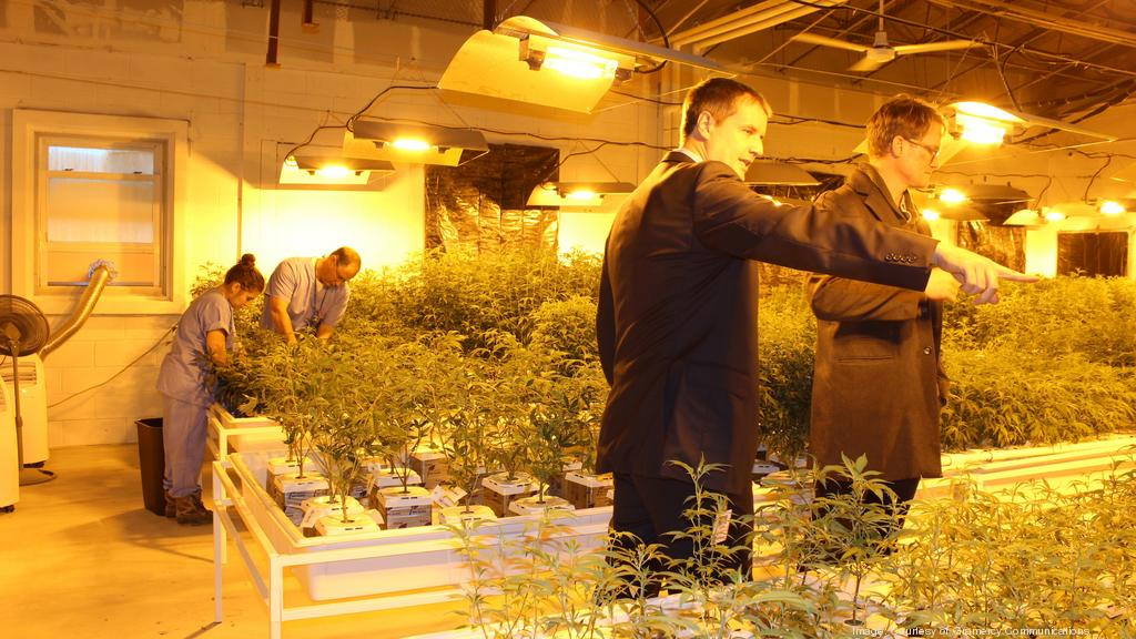 Holland Cannabis Company Mayflower Botanicals Acquired By Out Of State Entity For 10 Million Boston Business Journal