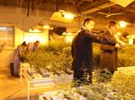 Doubling medical marijuana companies in New York could destabilize market, CEO says