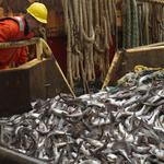 Feds: Fish caught in Russia and processed in China can no longer be called 'Alaskan'