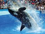 Morning briefs: Judge tosses SeaWorld suit; books and booze?