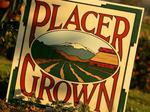 Placer County to consider new rules for rural winery, farm brewery events