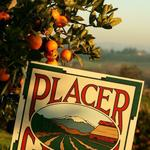 Placer, Sacramento counties quarantine stores to stop citrus pest