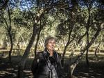 Olive growers show a different kind of oil to generate from South Texas land