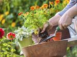 Garden retailer targets Lake Norman for expansion