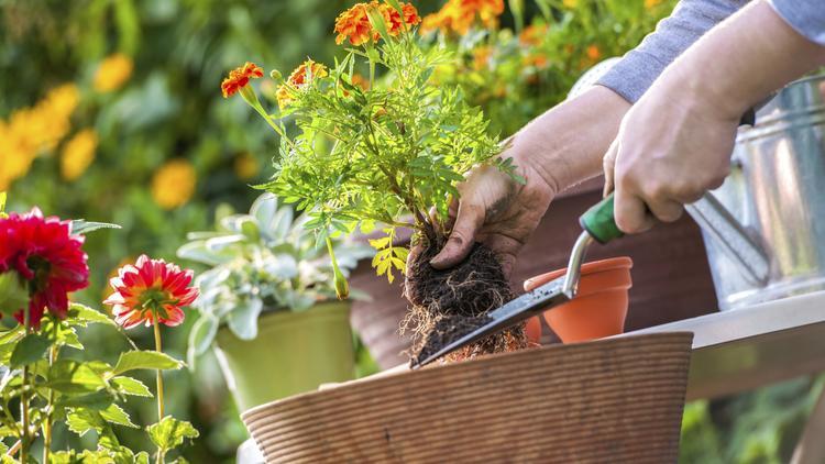 Pike Nurseries Is A Full Service Garden Company
