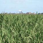 The end of an era for Hawaii sugar