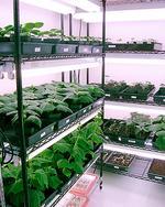 Marrone Bio Innovations seeks EPA approval for worm killer