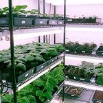 Marrone Bio gets license to work on drought-tolerant plants