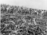Report addresses Maui's farming future after sugar