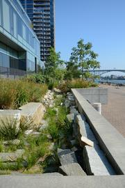 "Bioswales along the South Waterfront Greenway manage stormwater runoff from streets, cleanse the ground water to Department of Environmental Quality standards and, within their soils, help store carbon from the atmosphere. The Climate Solutions group's recent report on natural infrastructure reveals that bioswales are ""one of many cost-effective tools for resilient cities"" because they tackle many problems simultaneously."