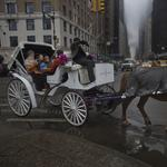 Teamsters reject De Blasio's carriage plan; Council calls off vote