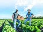 Black Hog Farm starts major partnership with Sysco