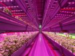 $23 million indoor farm coming to West Louisville