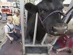 Morrisville animal diagnostics developer raises $1.7M