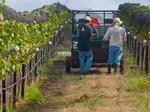 Hawaii's wine is a tough row to hoe