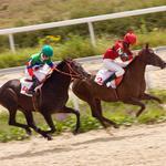 Judge gives split decision in horse track regulatory fight