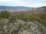 Jumping juniper: Sustainability bigwigs to help manage proliferating wood (Photos)