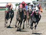 Pa. to create single commission to oversee horse racing