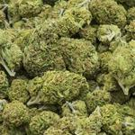 Have questions about growing marijuana in Ohio? The state has answers