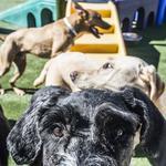 Jacksonville pet company gets new majority owner