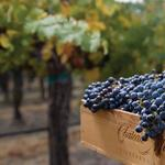 Ste. Michelle Estates snaps up popular Sonoma County winery