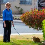 5 things you need to know today, and a cat video extravaganza hits ABQ