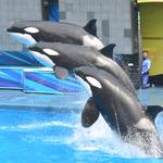 SeaWorld adds two independent theme park industry execs to board