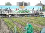 Urban agriculture gets Emanuel's support