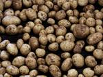 Canadian potato company planting U.S. HQ in DeForest