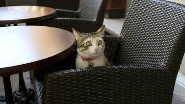 Would you visit a cat café? Why or why not?