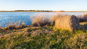 Amazon HQ2 bid emerges from farmland of Central Texas
