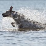 Diving dogs to star in first big public event at Drexel Town Square