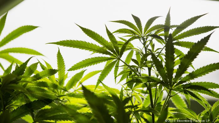 Montgomery Co. medical marijuana group to raise $4 million in early funding