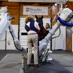 Horse sense: Penn Vet displays new robotic-controlled imaging system