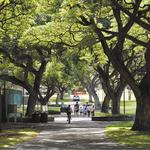 University of Hawaii at Manoa online nursing program raises U.S. News rank