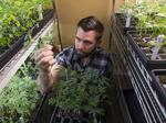 Sean Parker's pot campaign kicks off in S.F. as legalization heads onto ballot
