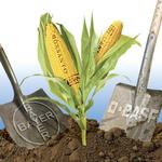Analysts to Monsanto: Grow big or grow home