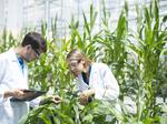 2016 Life Sciences Awards: Bayer - Best Agricultural Biotechnology Company
