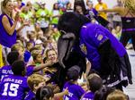 In Ocean City trips, Ravens make 'significant investment' to reach new fans
