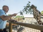 San Antonio Zoo changes helping area hotels fill more rooms