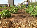 Food Bank lobbies for farm tax credit bill
