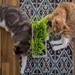 The Dancing Cat lounge creates a cat-lover community