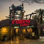 Busch Gardens Tampa Bay names new president